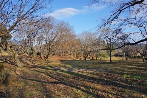 1磯部桜川公園
