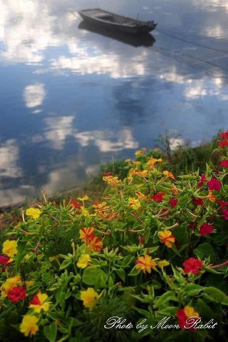オシロイバナと加茂川の小舟
