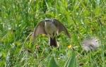 DSC_1388_bird_1a.jpg