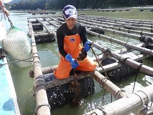 大島 牡蠣の養殖場1