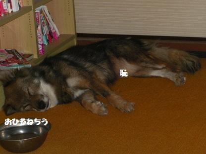 CIMG8548.jpg