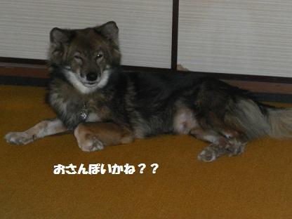 CIMG8942.jpg