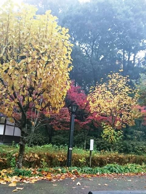 もみじ谷20161119002