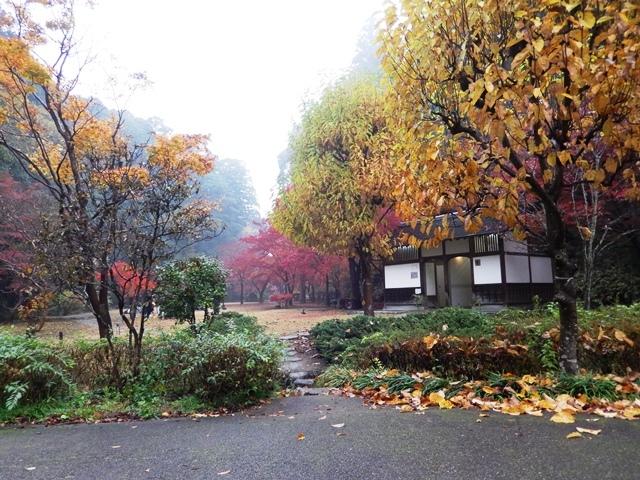 もみじ谷20161119003