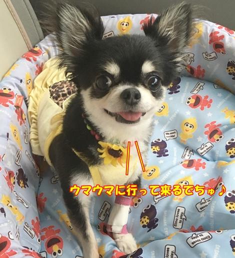 20160726hina1.jpg