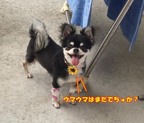 20160726hina2.jpg