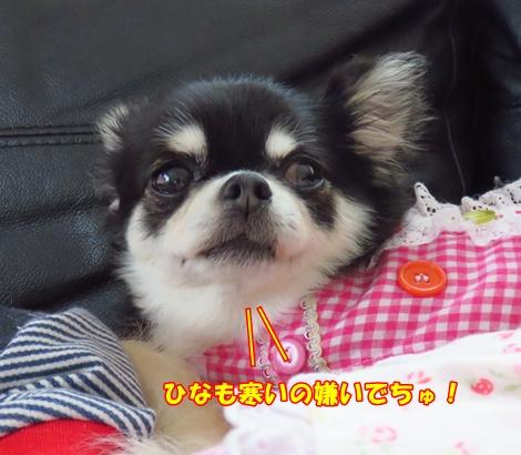 201611IMG_7361.jpg