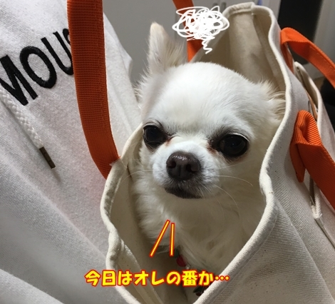 201612S__23584784.jpg