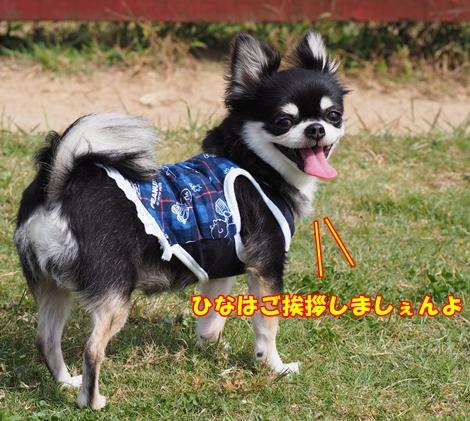 omdPA166489.jpg