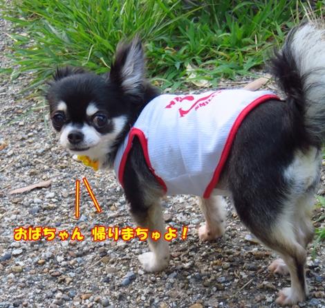sx701IMG_5256.jpg