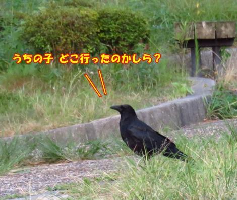 sx701IMG_5709.jpg