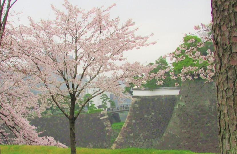 higashigyoen161225-143.jpg