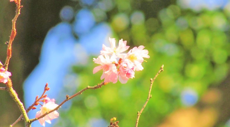 higashigyoen161225-148.jpg
