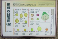 higashigyoen161225-203.jpg