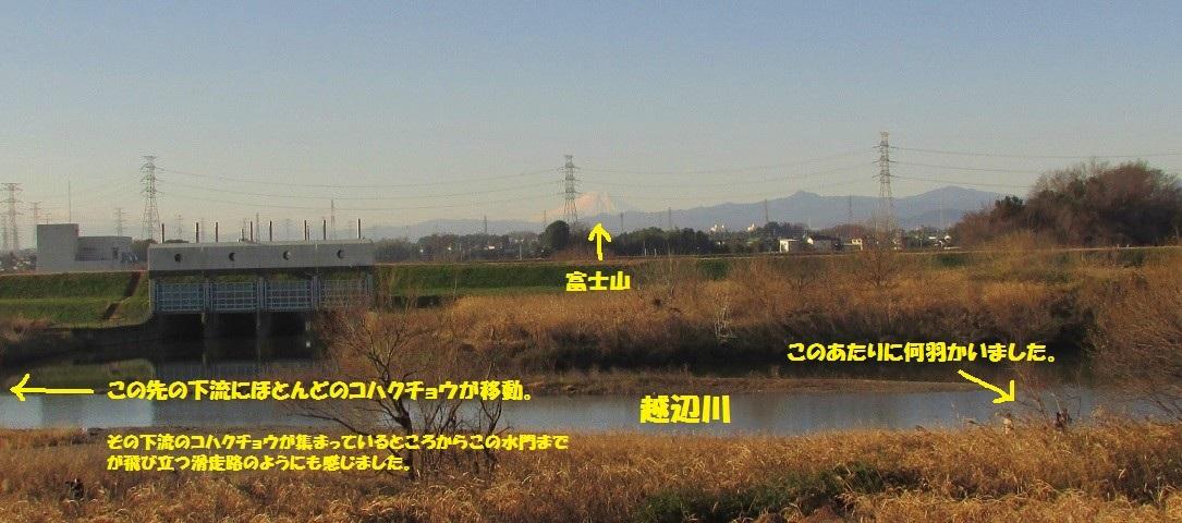 kawazima161218-119.jpg