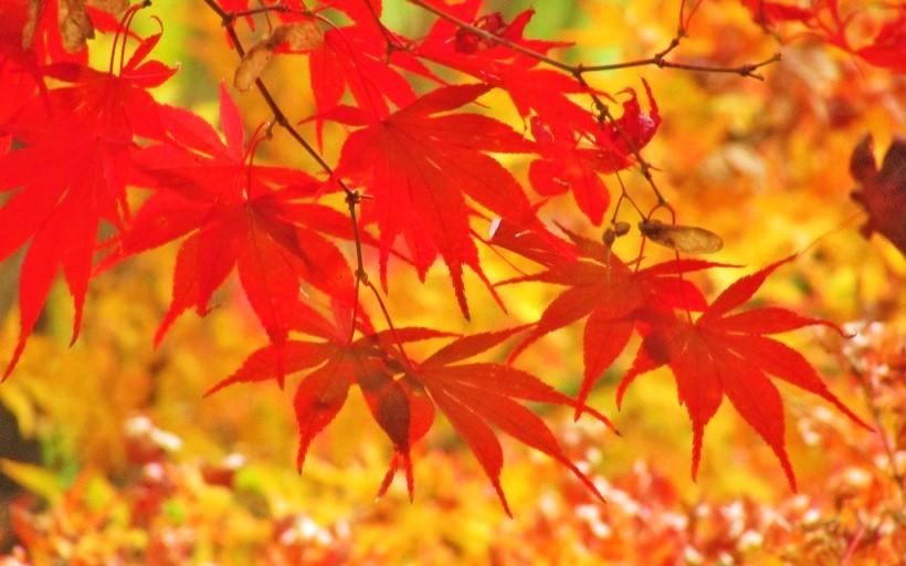 kobayashi161123-101.jpg
