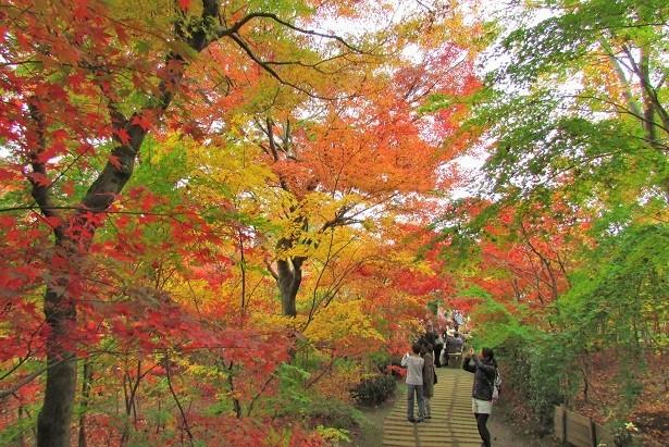 kobayashi161123-103.jpg
