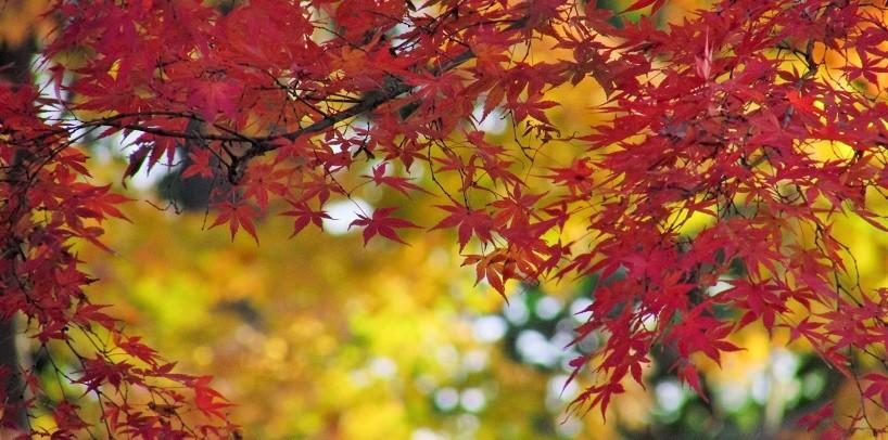 mizumoto161203-106.jpg