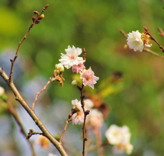 shinzyuku061204-102.jpg