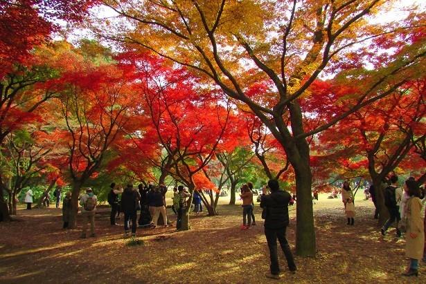 shinzyuku061204-108.jpg