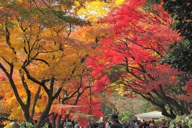shinzyuku061204-109.jpg