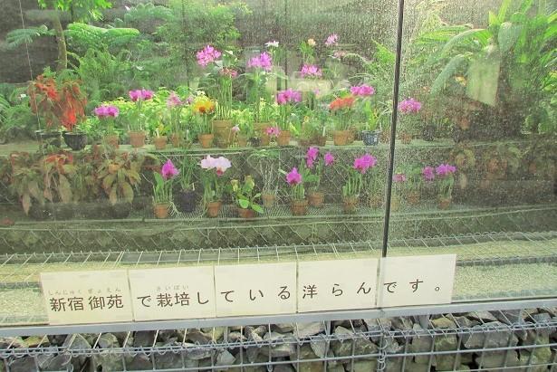 shinzyuku061204-117.jpg