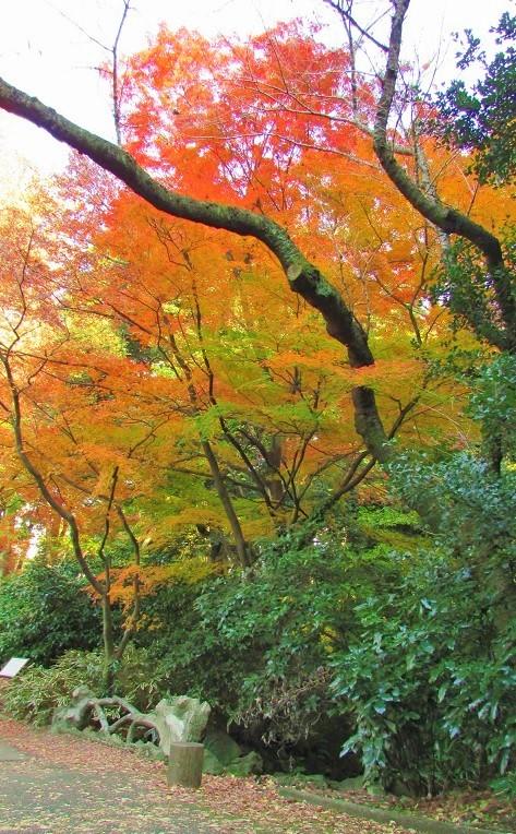 shinzyuku061204-124.jpg