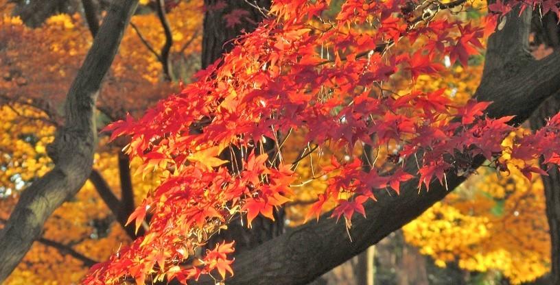 shinzyuku061204-126.jpg