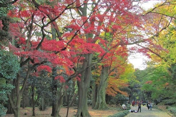 shinzyuku061204-128.jpg
