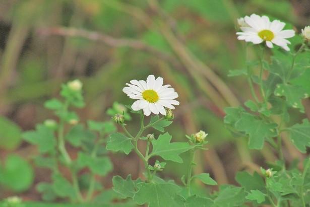 shouwa161030-109.jpg