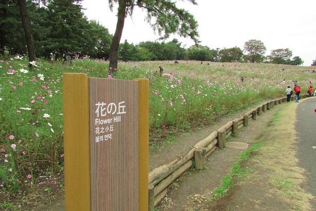 shouwa161030-120.jpg