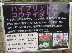 shouwa161030-203.jpg
