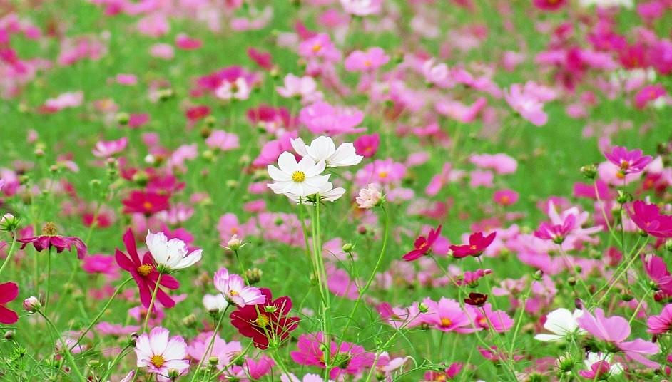 yoshimi161016-106.jpg