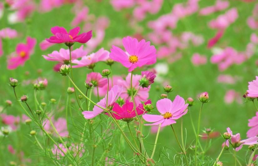 yoshimi161016-108.jpg