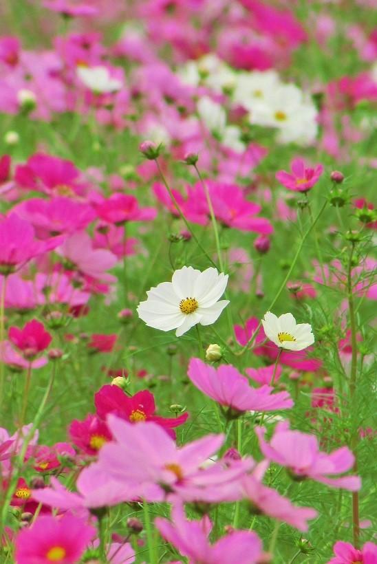 yoshimi161016-115.jpg