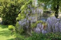 オックスフォード 庭2