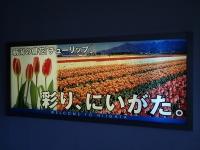 P8130016d.jpg