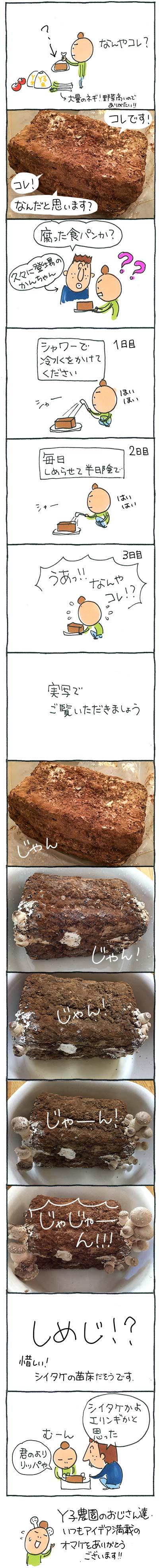 161031食パン