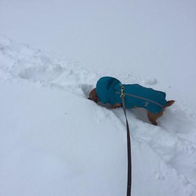 mocha snow