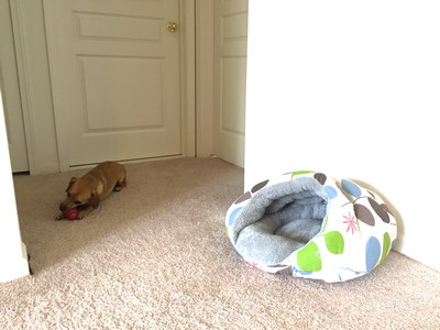 mocha's bed