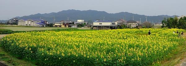 2朝倉16.11.13
