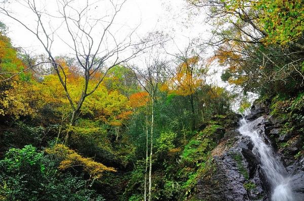 6白糸の滝16.11.21