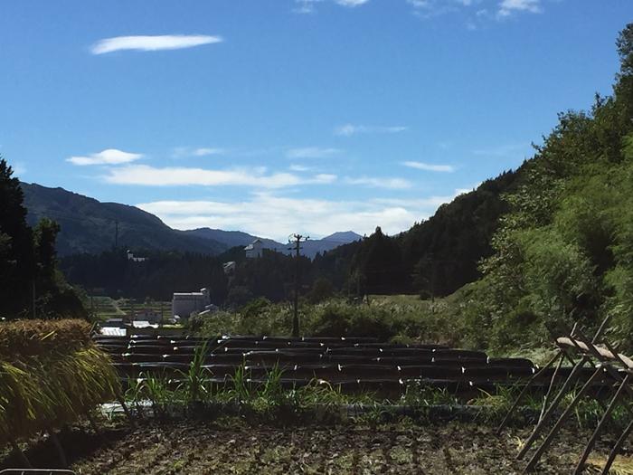 2016 農繁期 秋 コシヒカリ 稲刈り 3