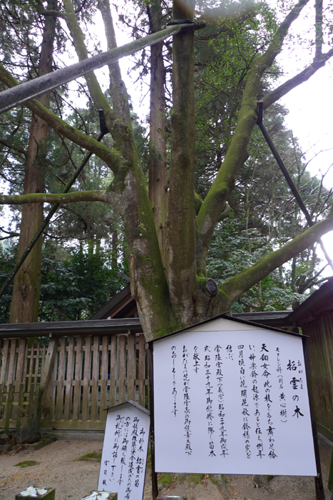 日向の国の神社  天岩戸神社  26