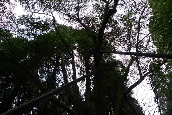 日向の国の神社  天岩戸神社  27