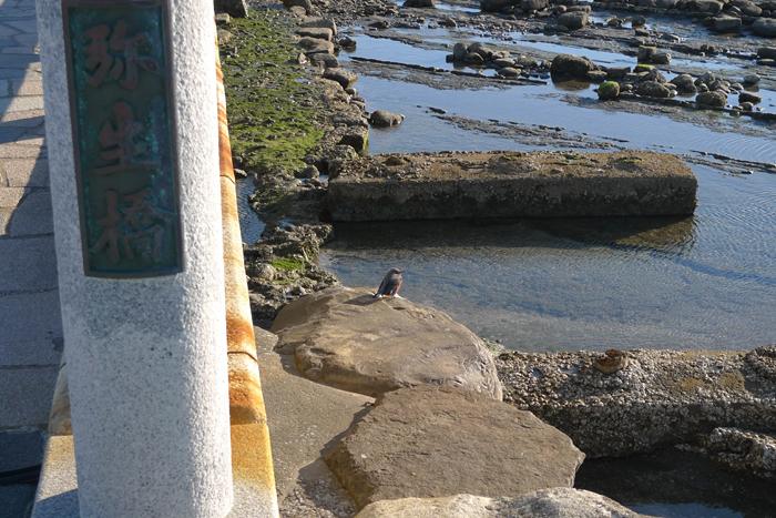 日向の国の神社 青島神社  4