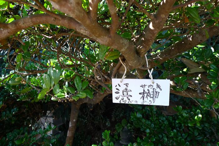 日向の国の神社 鵜戸神宮  31
