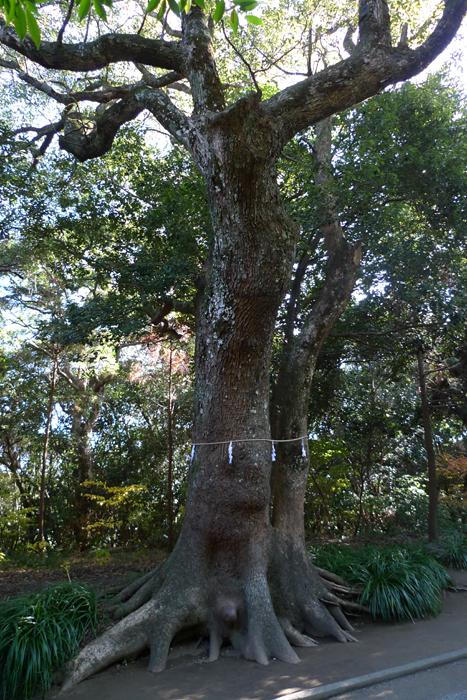 日向の国の神社 江田神社  12