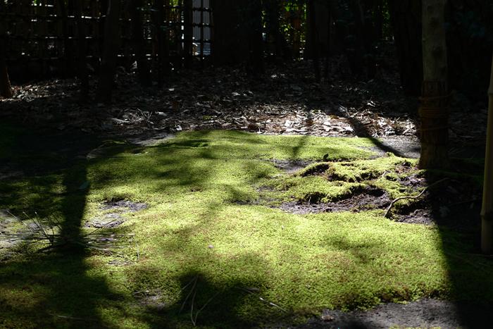 相模の国の神社  寒川神社  8