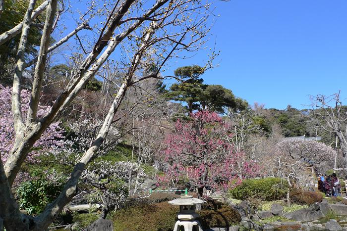 鎌倉 長谷寺  4